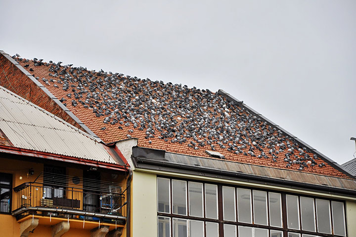 A2B Pest Control are able to install spikes to deter birds from roofs in Cricklewood.