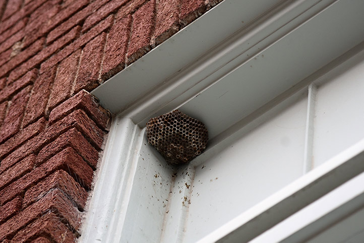 We provide a wasp nest removal service for domestic and commercial properties in Cricklewood.